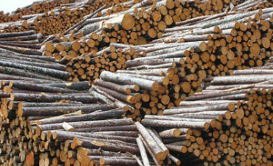 Illegal Logging Legislation